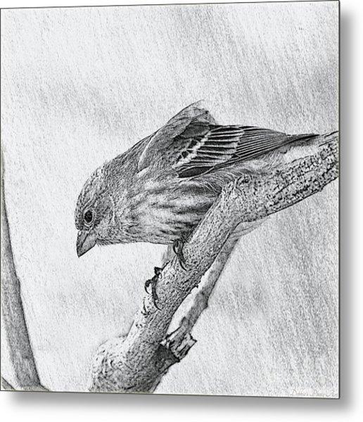 Finch Digital Sketch Metal Print
