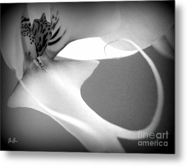 Fine Lines Black And White Metal Print
