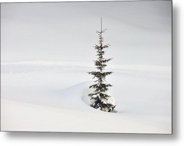 Fir Tree And Lots Of Snow In Winter Kleinwalsertal Austria Metal Print