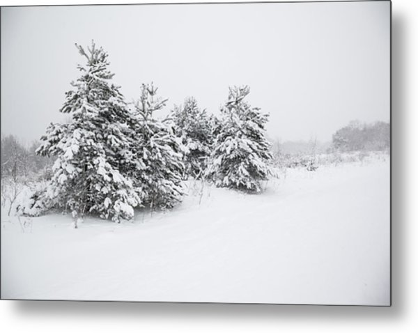 Fir Trees Covered By Snow Metal Print