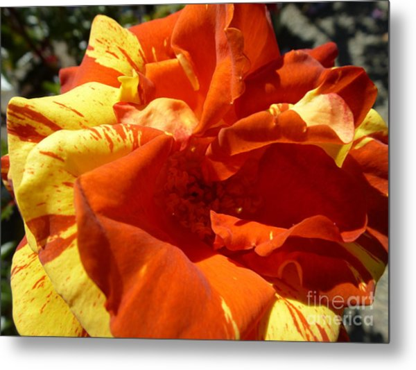 Fire Ball Metal Print by Anat Gerards
