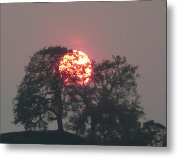 Fire In The Trees Metal Print