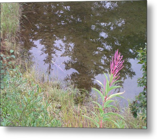 Fireweed And Salmon. Metal Print