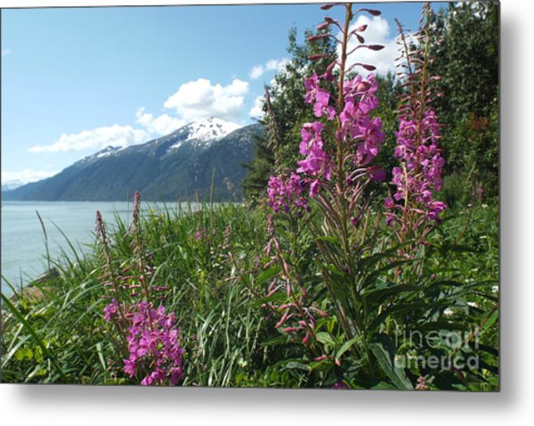 Fireweed At Yakutania Point Metal Print
