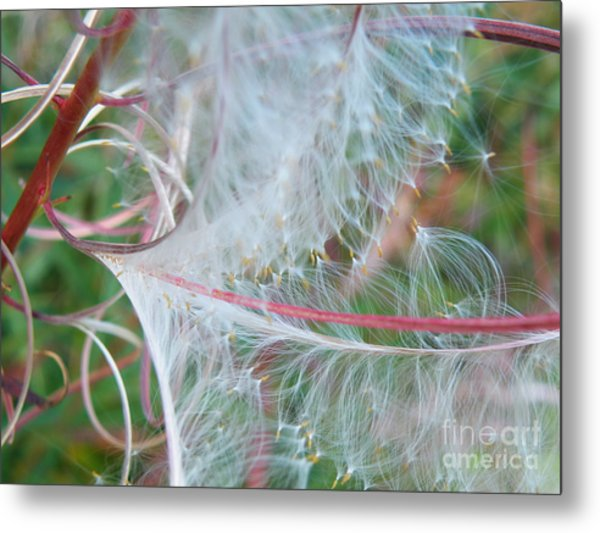 Fireweed Number One Metal Print