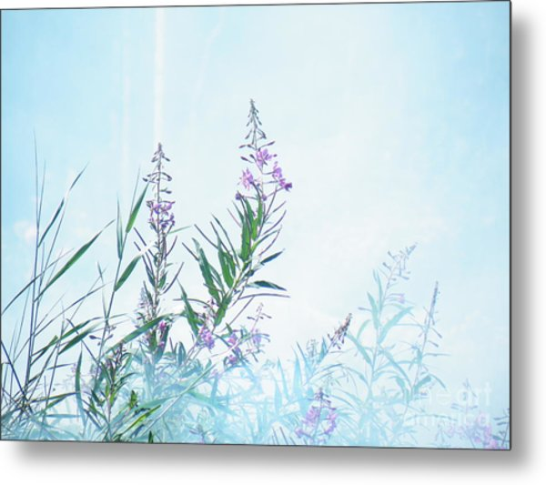 Fireweed Number Two Metal Print
