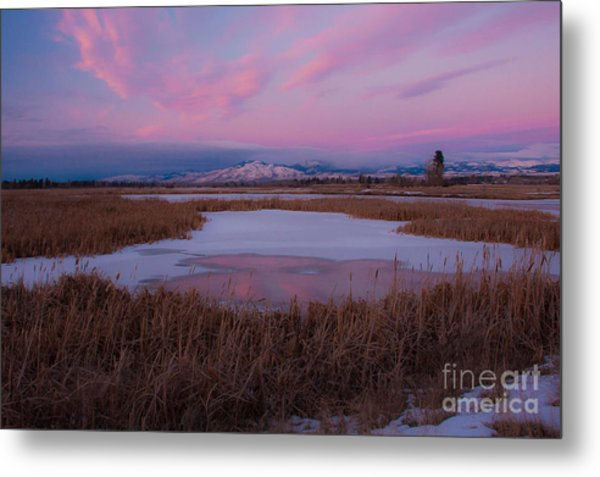 Metal Print featuring the photograph First Evening 2013 by Katie LaSalle-Lowery