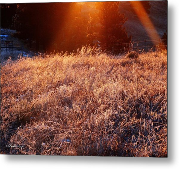 First Light Metal Print