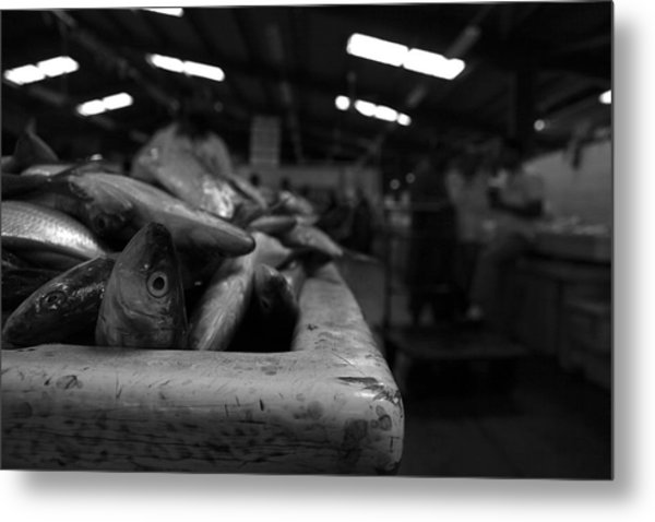 Fish Market In Dubai 2 Metal Print by Maeve O Connell