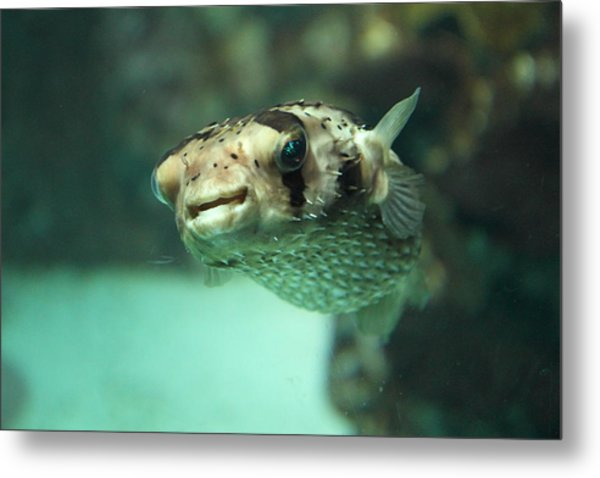 Fish - National Aquarium In Baltimore Md - 1212135 Metal Print by DC Photographer