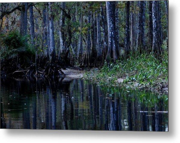 Fisheating Creek 29 Metal Print by Carol Kay