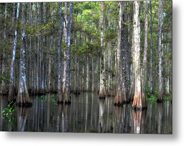 Fisheating Creek Metal Print by Bob Jackson