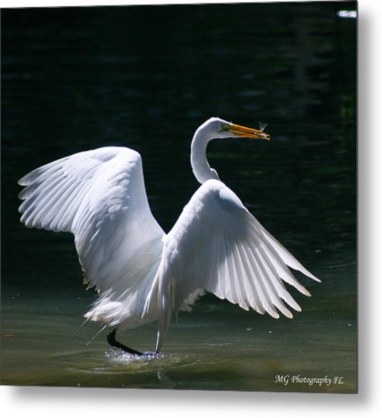 Fishing Egret Metal Print