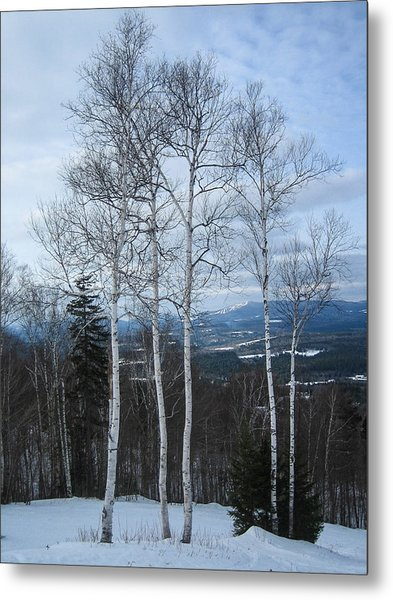 Five Birch Trees Metal Print