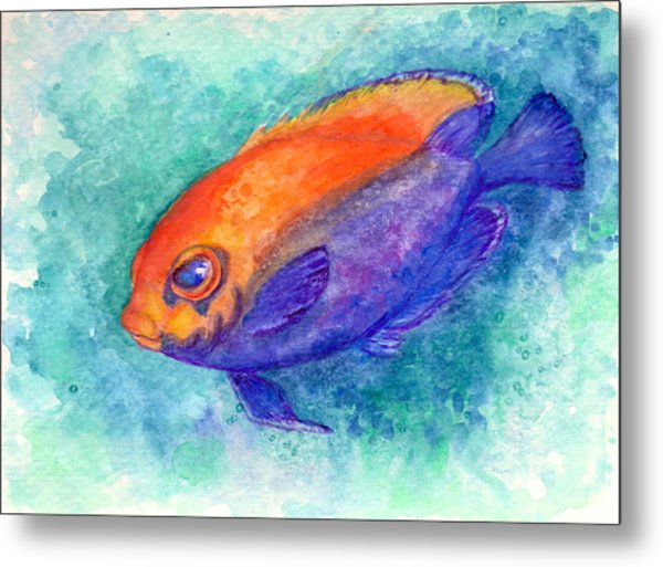 Flameback Angelfish Metal Print