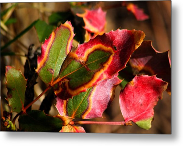 Flaming Leaves Metal Print