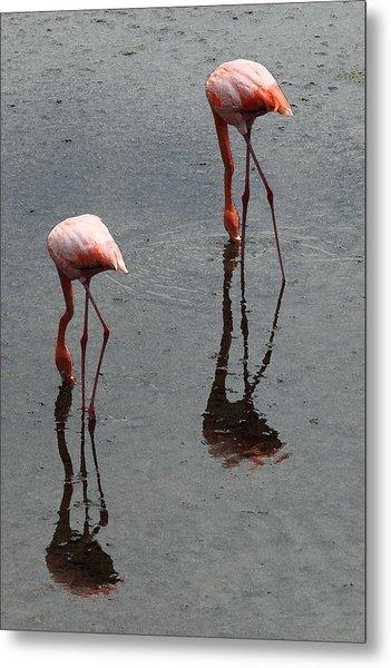 Flamingo Ballet Metal Print