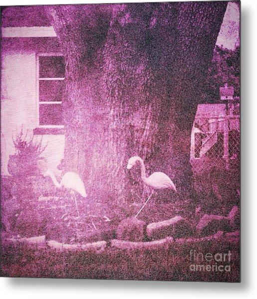 Flamingos Metal Print by Beth Williams