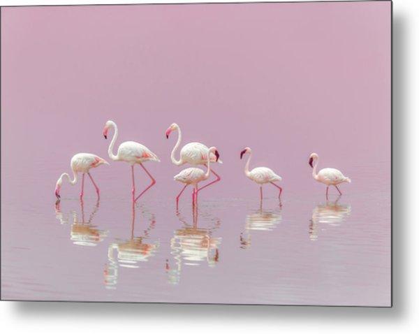 Flamingos Metal Print by Eiji Itoyama