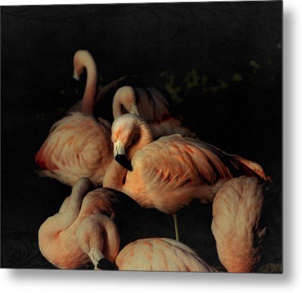 Flamingos In Repose Metal Print