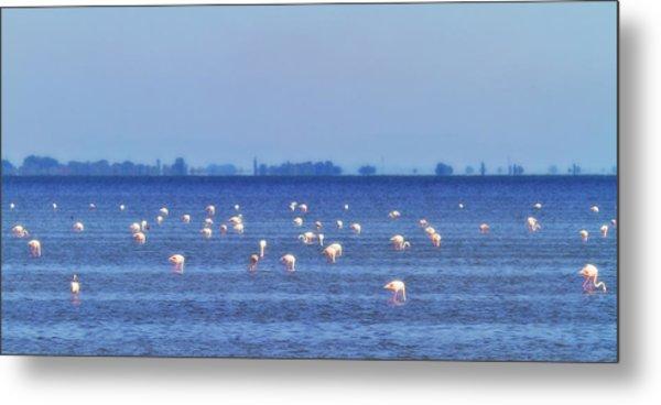 Flamingos In The Pond Metal Print