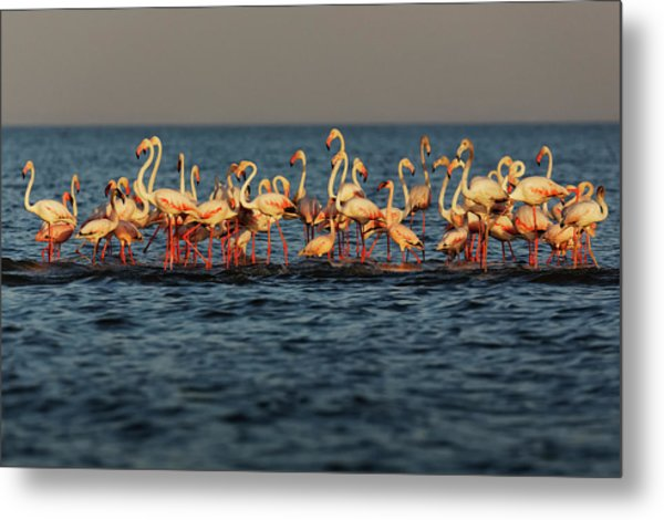 Flamingos On Lake Turkana Outside Elyse Metal Print