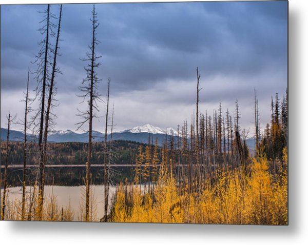 Flathead National Forest Metal Print