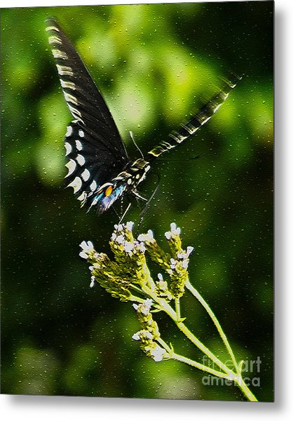 Flattering Flutter Metal Print