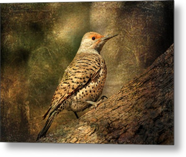 Flicker In A Tree Metal Print