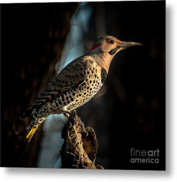 Flicker In Light Metal Print
