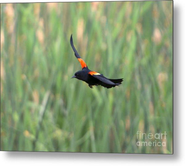 Flight Of The Blackbird Metal Print