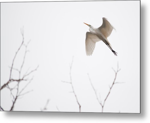 Flight Of The Egret 1  Metal Print