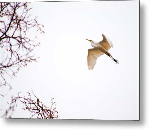 Flight Of The Egret 2  Metal Print
