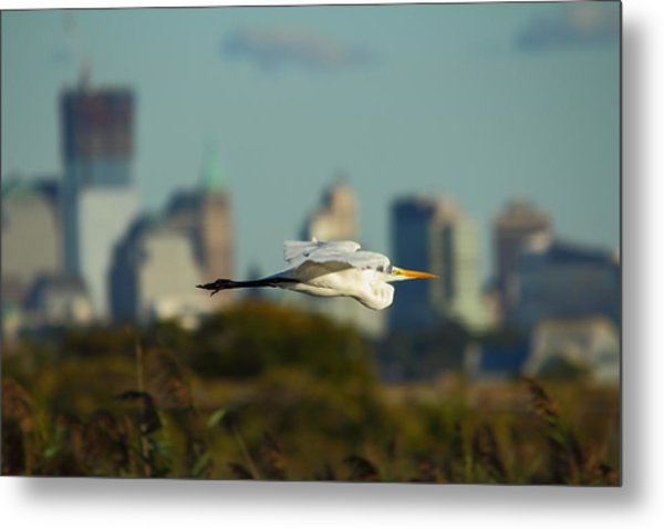 Flight Of The Great Egret Metal Print