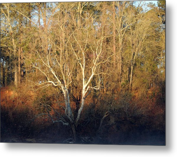 Flint River 16 Metal Print