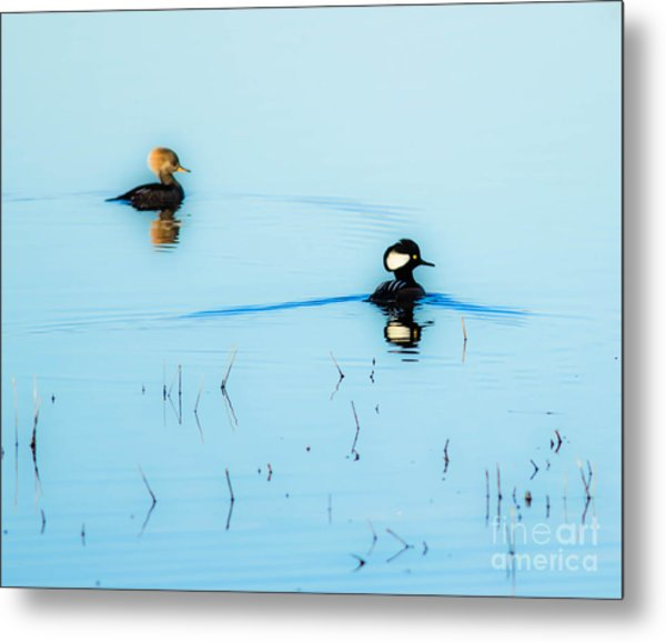 Floating And Glowing Metal Print by Ursula Lawrence