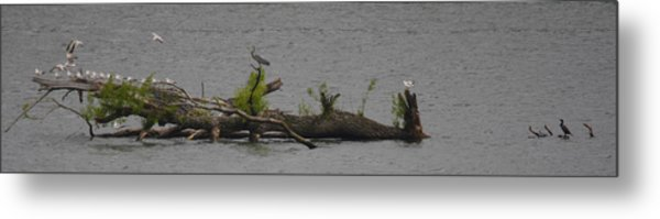 Floating Aviary Metal Print by Valerie Wolf
