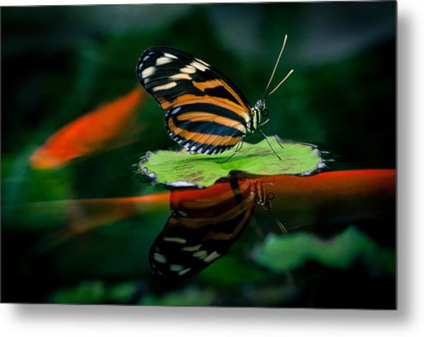 Floating By On Koi-ness Metal Print