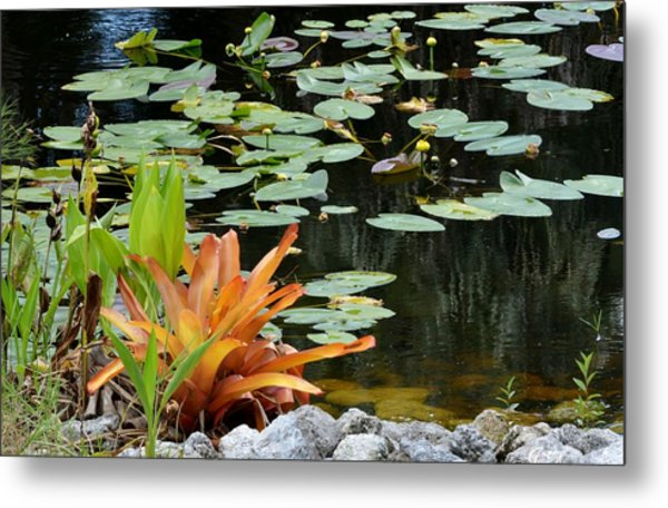 Floating Lily Pond Metal Print