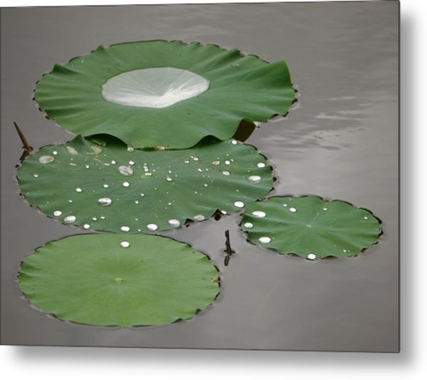 Floating Lotus Leaves Metal Print