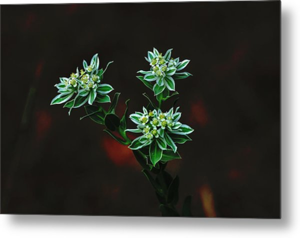 Floating Petals Metal Print