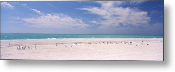 Flock Of Seagulls On The Beach, Lido Metal Print