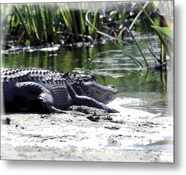Metal Print featuring the photograph Florida Alligator On The Sand by William Havle