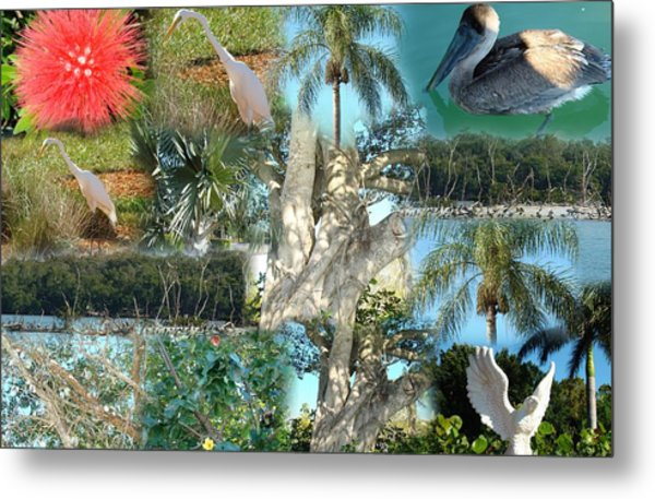 Florida Birds And Trees Metal Print