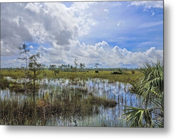 Florida Everglades 0173 Metal Print