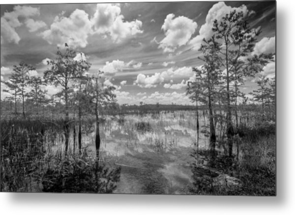 Florida Everglades 5210bw Metal Print