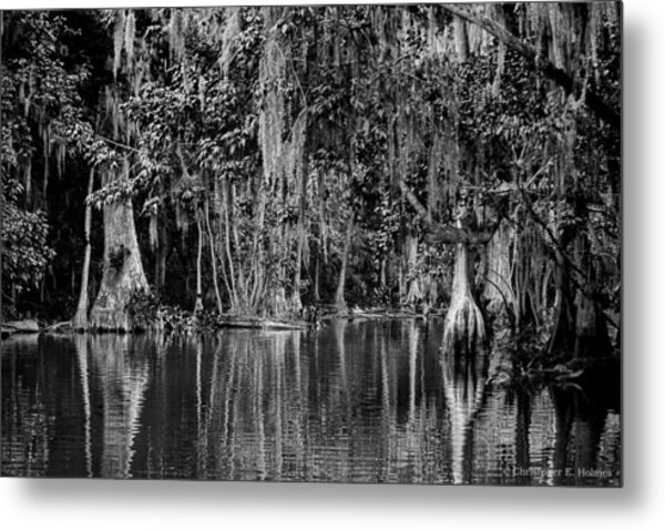 Florida Naturally 2 - Bw Metal Print