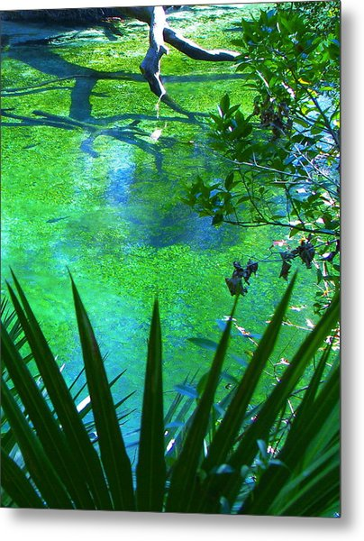 Florida Swamp With Driftwood Metal Print