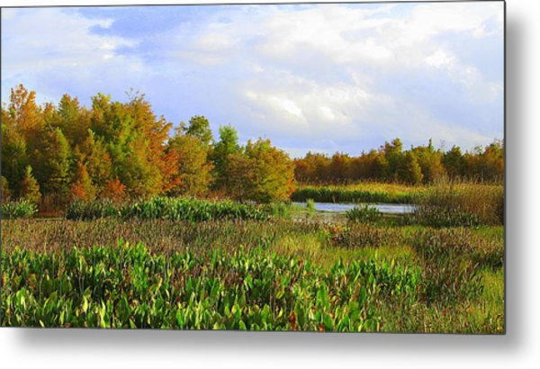Florida Wetlands August Metal Print