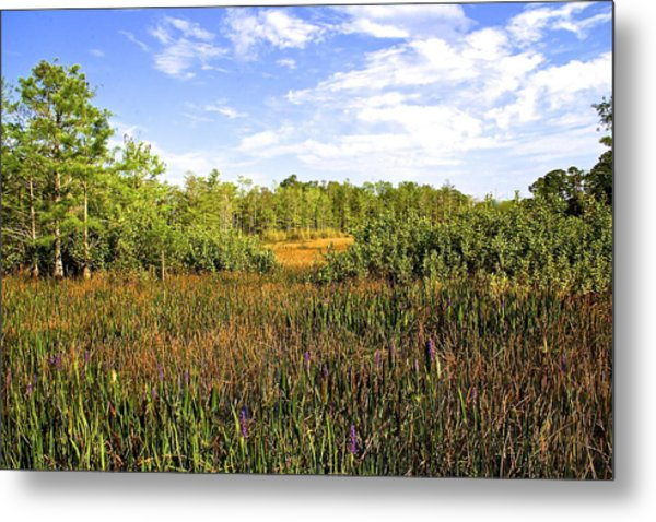 Florida Wetlands Metal Print